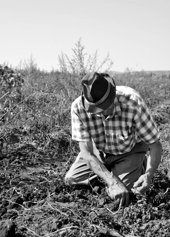 old-man-working-field